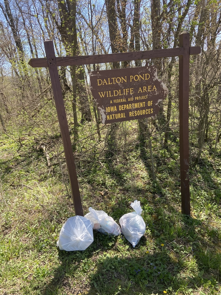 Dalton Pond cleanup